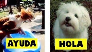 5 Animales Hablando Captados en Cámara en la Vida Real - Pa...