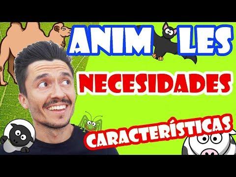 CARACTERÍSTICAS de los ANIMALES para NIÑOS