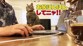 【モーニングルーティン】お尻ぽんぽんを待つ猫がかわいい