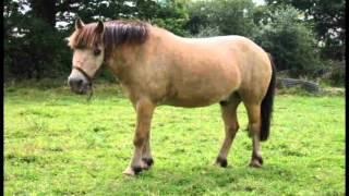 petit poney officiel clip