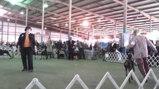 Travis County, Tx Winner's Bitch, Doberman Pinscher 10-27-12
