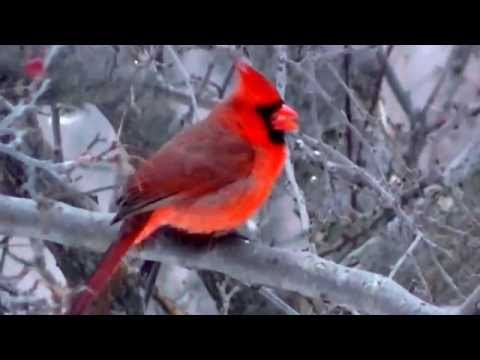 MUST SEE Beautiful Travel Minnesota Nature,Parks, and Lakes !