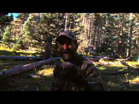 Bowhunting Elk in Southern Colorado during the Peak of the Rut PTAH_1118