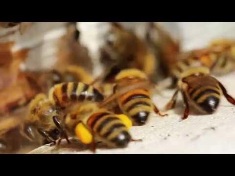 Bien Zenker Das Bienen Begegnungshaus Youtube