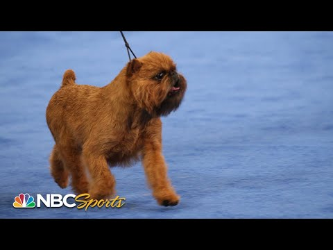 2017 National Dog Show: Best in Show (Full)