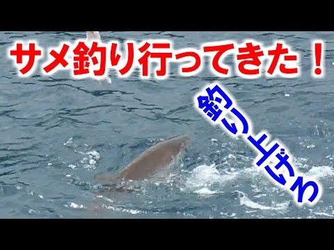 【奄美】凶暴なサメを釣り上げろ!【大島軍】