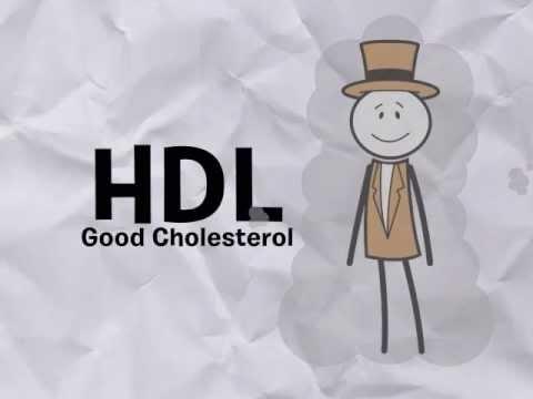 LDL Cholesterol & HDL Cholesterol