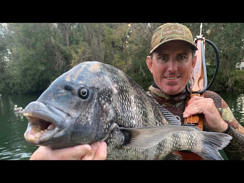 ***GIANT SHEEPSHEAD*** SPEARFISHING - {CATCH, CLEAN, COOK}