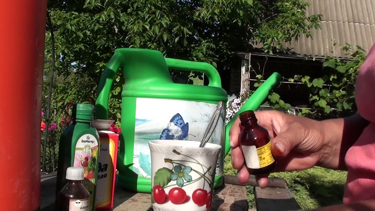 Защищаем  сад от болезней.Сода,йод,нашатырный спирт от болезней растений.