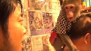Japanese Monkey Waiters