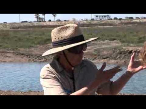 Huntington Beach Wetlands Restoration-Protecting California's Coast!