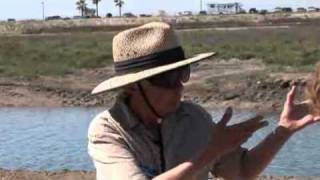 Huntington Beach Wetlands Restoration-Protecting California