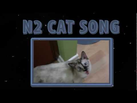 N2 the Talking Cat – N2 Cat Song (Official Music Video)