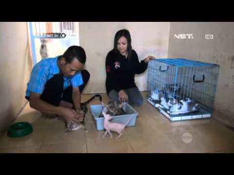 NET24 - Kucing Ras Langka