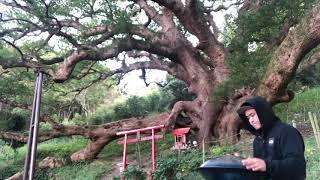志々島 almahandpans Eb thumbnail