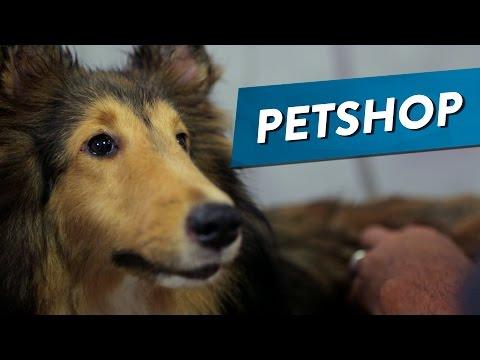 PET SHOP de YouTube · Alta definición · Duración:  3 minutos 59 segundos  · Más de 3.006.000 vistas · cargado el 27.05.2015 · cargado por Parafernalha
