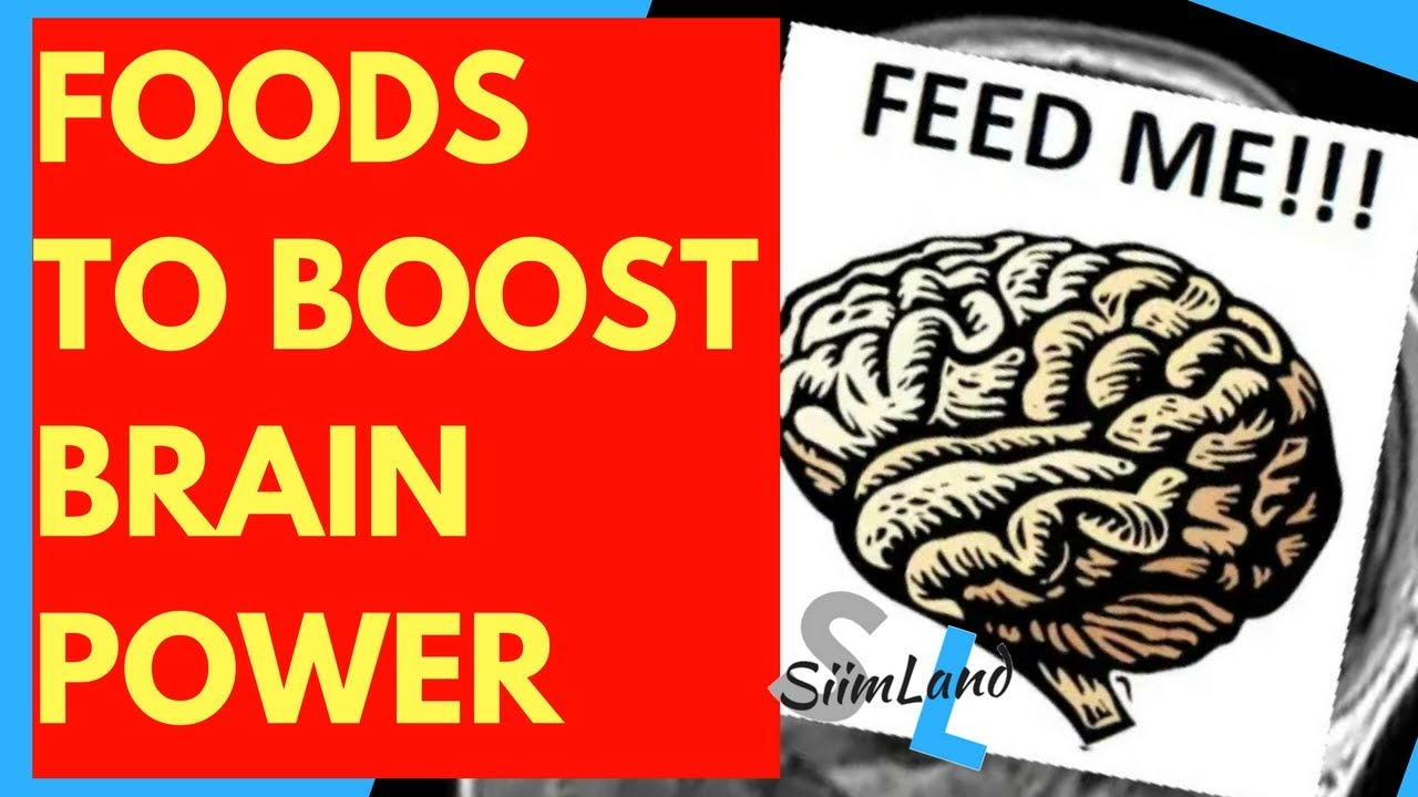What to Feed Your Neocortex to Boost Brain Power - Siim Land