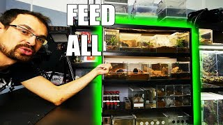 Download Feeding ALL TARANTULAS from one shelf! Mp3 and Videos