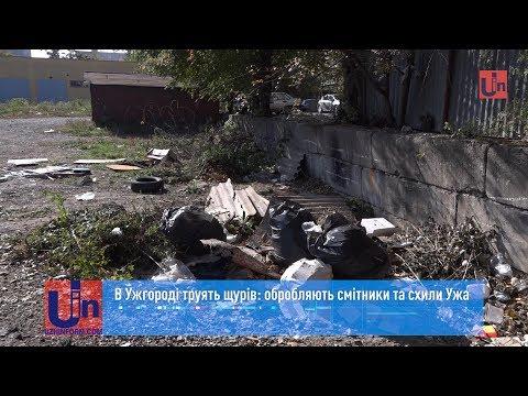 В Ужгороді труять щурів: обробляють смітники та схили Ужа