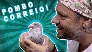 POMBO DE RUA? NÃO! POMBOS CORREIO! | RICHARD RASMUSSEN