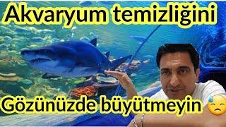 aquarium fish, Fish species,cichlid birth,Cichlid Aquarium,cichlid aquarium, aquarium cleaning