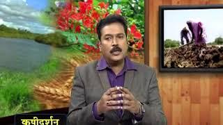 Krishidarshan - 05 October 2017 - हळद लागवडीनंतरचे व्यवस्थापन