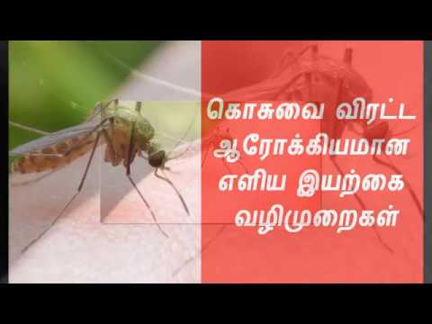 Natural Mosquito Repellent Solution in Tamil - Today News In Tamil