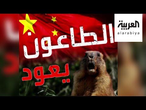 تفاعلكم | بعد كورونا وغيره من الفيروسات، الطاعون يظهر في الصين!  - نشر قبل 37 دقيقة