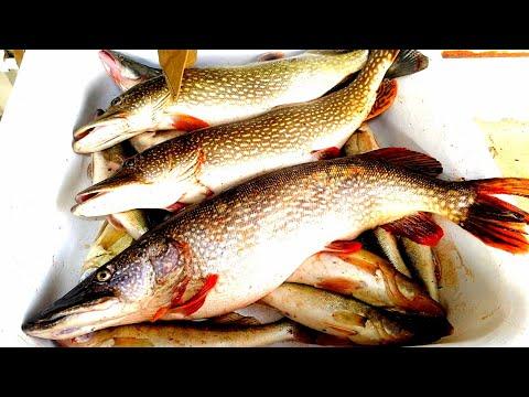 Рыбалка в Астрахани 2019 САМЫЕ РЫБНЫЕ МЕСТА ТУТ