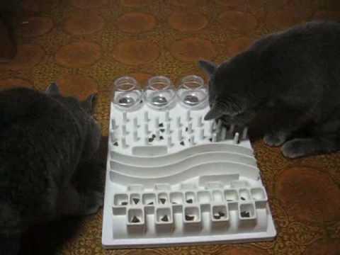 Cat Activity Fun Board