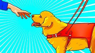 Eğer Yanında Sahibi Olmayan Bir Rehber Köpek Görürseniz, Onu Sevmeyin!