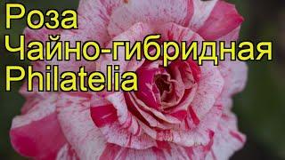Роза чайно-гибридная Филателия. Краткий обзор, описание характеристик, где купить Philatelia