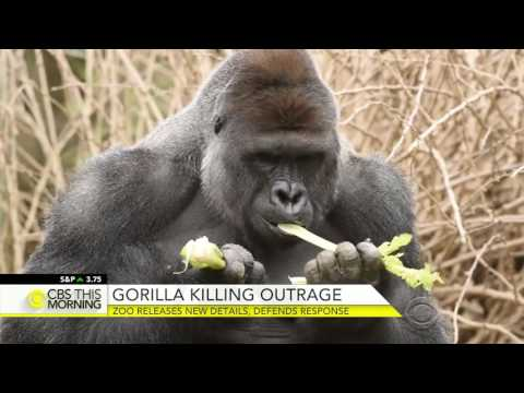 Zoo releases new details in gorilla killing, defends response