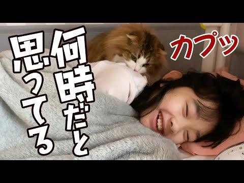春休みの朝起きない娘を起こしに来て攻撃をくらわすもふ猫