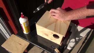 How To: Build a Budgie Nest Box | BirdSpyAus