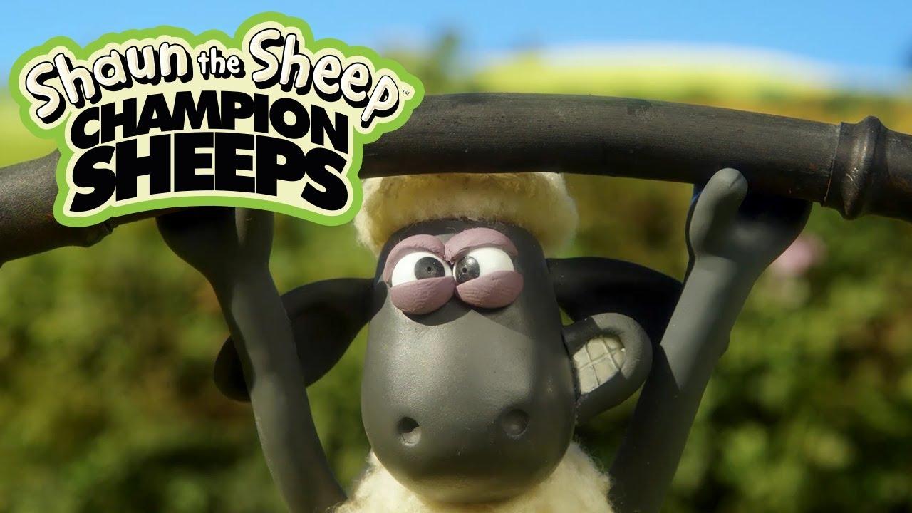 Cử tạ | Championsheeps | Những Chú Cừu Thông Minh [Shaun the Sheep]
