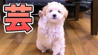 動画の評価よろぴく See youTシャツ → http://clubt.jp/shop/S000004666...