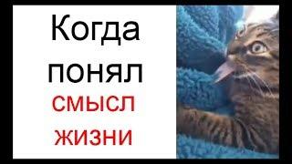 Подборка приколов 29 Best Coub ЛУЧШЕЕ КУБЫ НЕДЕЛИ Лютые приколы