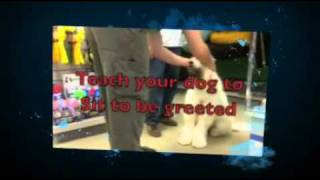 Dog Obedience Classes Raleigh Nc