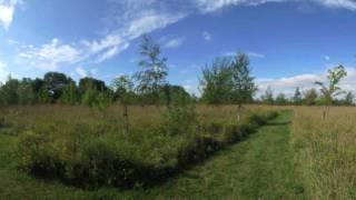 Farndon Park Woodland