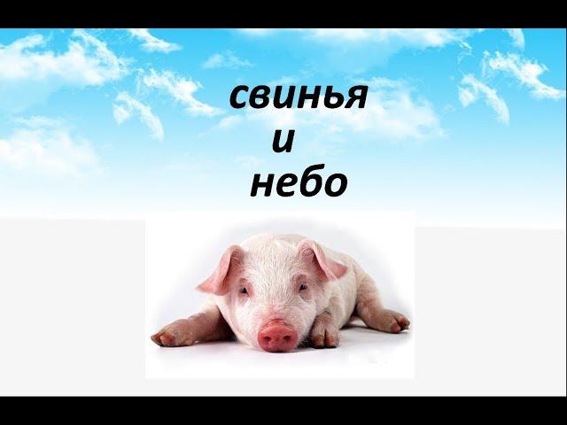 Свинья и небо