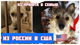 Из приюта в Сибири в семью в США История бездомной собаки