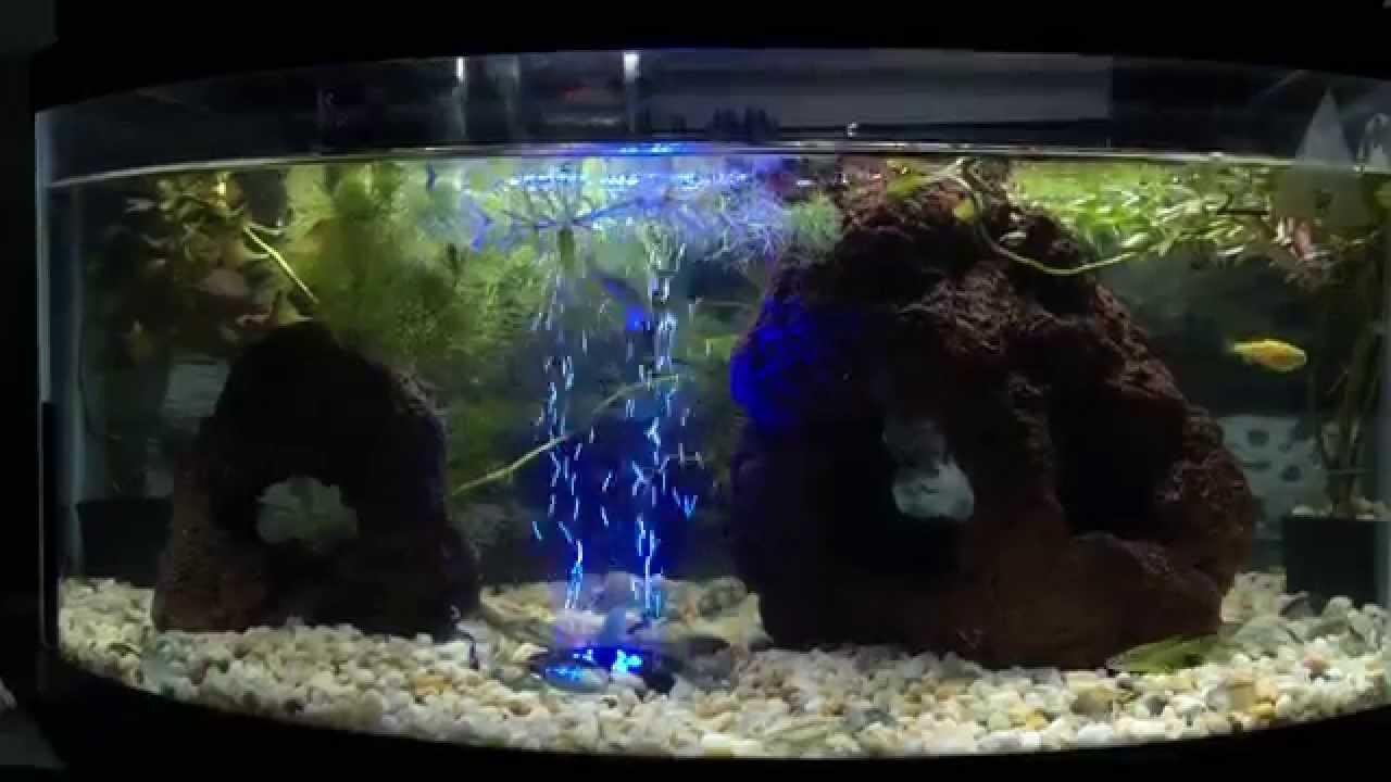 Acuario 40 litros de agua dulce y peces tropicales youtube for Peces de agua dulce para peceras