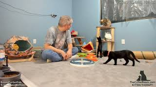 Olympian Kittens - Evening Play Time 2018-02-24