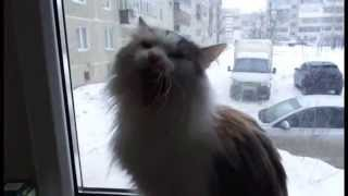 Кошка Муся смотрит в окно