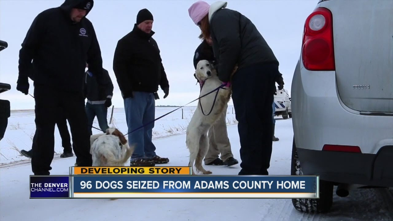 nearly 100 dogs seized from an adams county home youtubenearly 100 dogs seized from an adams county home