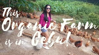 Organic Chicken and Eggs: Healthier Choices for Cebu