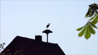 Der Storch Auf der Sirene2011