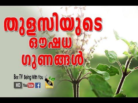 Download Thulasi: Medical Benefits തുളസിയുടെ ഔഷധ ഗുണങ്ങള്