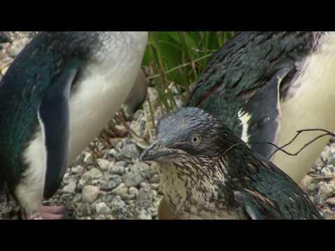 EXCLUSIVO! Câmera Record Mostra Os Bastidores Da Viagem à Nova Zelândia